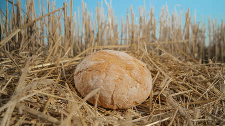 Round bread in wheat field. Homemade baking concept. Fresh baked bread on hay background. Wheat loaf on beveled spikelets. Harvest in village concept.