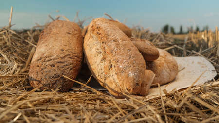 Various breads on flat cake lying in hay. Harvest in village concept. Fresh baked bread on hay and sky background. Warm loaf on beveled spikelets. Assortment of bread concept.