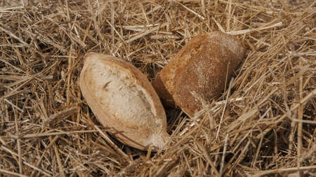 Two loaves of bread in wheat field. Homemade baking concept. Fresh baked bread on hay background. Wheat loaf on beveled spikelets. Harvest in village concept. 版權商用圖片