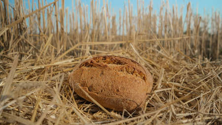 Tasty bread in wheat field. Homemade baking concept. Fresh baked bread on hay background. Wheat loaf on beveled spikelets. Harvest in village concept. 版權商用圖片 - 155537560