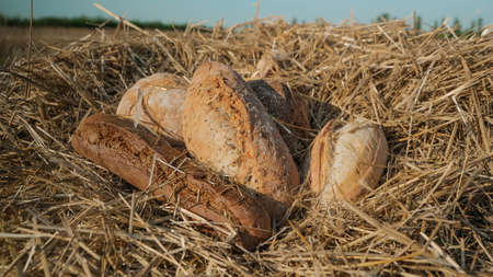 Loaves of different types of bread in wheat field. Harvest in village concept. Fresh baked bread on hay and sky background. Warm loaf on beveled spikelets. Assortment of bread concept.