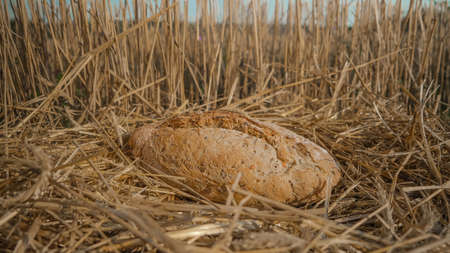 Bread in wheat field. Homemade baking concept. Fresh baked white bread on hay background. Wheat loaf on beveled spikelets. Harvest in village concept.