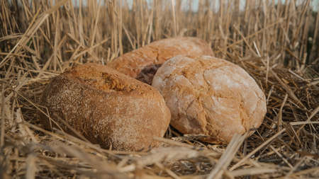 Loaves of different types of bread in wheat field. Homemade baking concept. Wheat bread on hay and sky background. Fresh baked loaf on beveled spikelets. Assortment of bread concept.