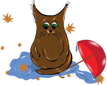 prankster: Sad kitten puddle autumn leaves Illustration