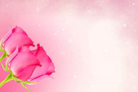 pink rose on an abstract background photo