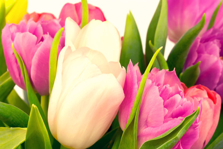 cadeau anniversaire: bouquet de tulipes m�re photo cadeau d'anniversaire valentine printemps fond flou s�lective tonique