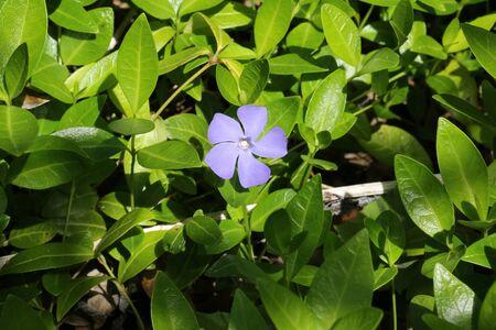 field of flower: blue field flower garden grass Archivio Fotografico