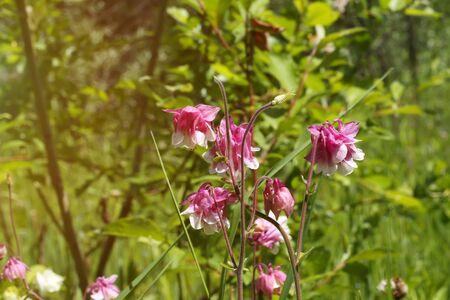 champ de fleurs: fleurs sauvages sur le terrain dans l'herbe du jardin l'�t�