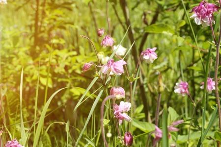 field of flowers: wild field flowers in the garden grass summer
