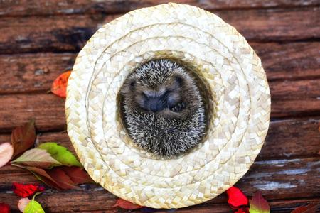 chapeau paille: h�risson en automne chapeau de paille