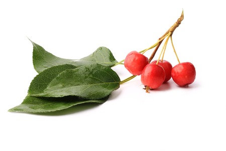 increase fruit: small red apples on a branch with leaves isolated on white background Stock Photo