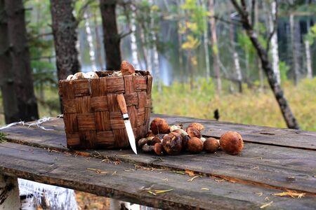 mushrooming: basket boletus mushrooms knife wood retro rustic style vintage wood old