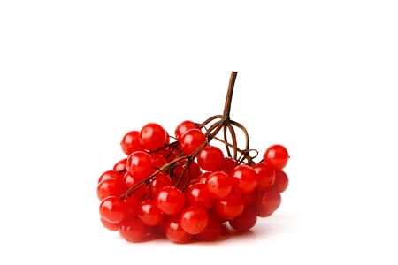 viburnum bunch isolated on a white background Stock Photo
