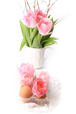huevo blanco: Spring Easter decoration tulips in eggs shells on a white background
