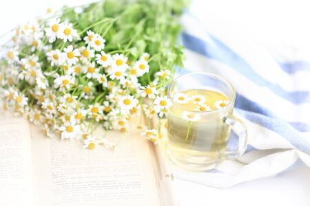 tenderness: summer blurred background of camomile tea and old book tenderness spring sunbeams