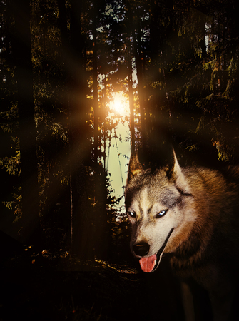 wolf in the forest at night mystic grunge moon mystery