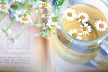 camomile tea: summer blurred background of camomile tea and old book tenderness spring sunbeams