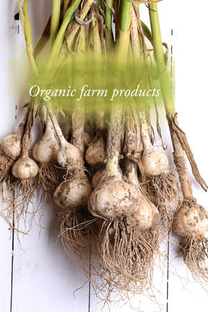 garlic organic farm products selective focus Stock Photo