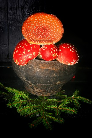 poisonous fly agaric mushrooms in a vintage gray cast iron pot on a black wooden background ingredient for magic potions Stock Photo