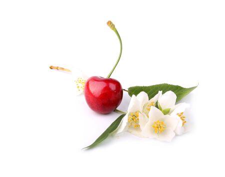 Cherry and jasmine isolated on white background Stock Photo