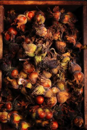 hazelnut nuts in the skin on a dark retro style background