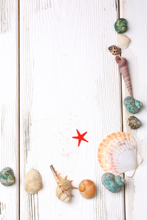 seashells on a white wooden background