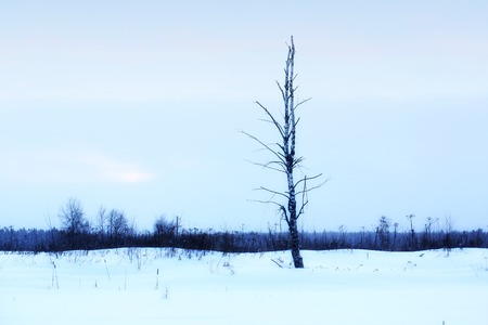 lonely tree on a winter evening landscape