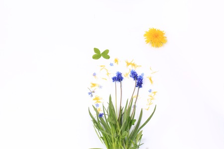 Creative concept with dandelion isolated on white background. spring easter composition Imagens