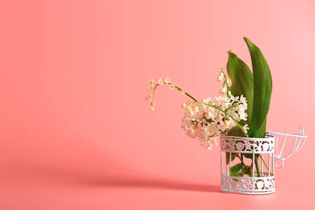 white lilac and lilies of the valley in an iron bird cage on a pink background