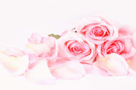bouquet of pale pink roses with petals on a light background. postcard background for Valentine's day