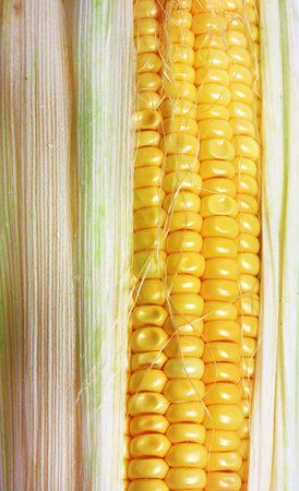 Corn closeup top view farm cob texture