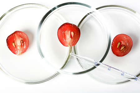 Halves of grapes in a petri dish. Cosmetic cosmetology concept.