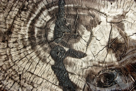 Old wood cut texture Stock Photo - 13313387