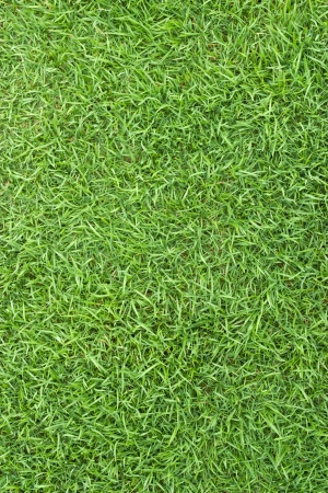 lose-up image of fresh spring green grass