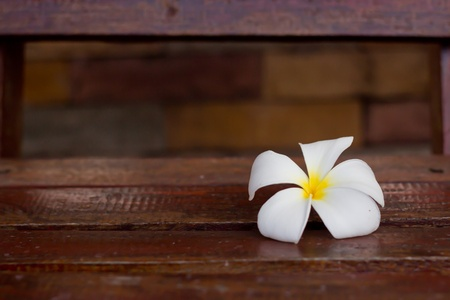 plumeria flower on wood photo