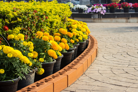 Beautiful flowerbed in summer park Stock Photo
