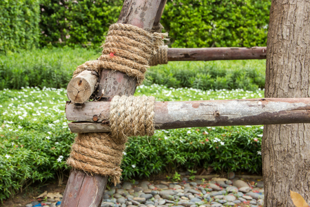 Rope bind to the wood shoring use as tree supporter to against wind ,Thailand photo