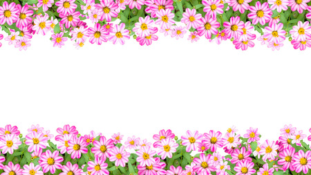 16:9 zinnia flower frame.Seamless in the horizontal direction. You can get the border as long as you want combining the left side to the right. Stock Photo