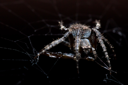 Garden spider with prey in its web