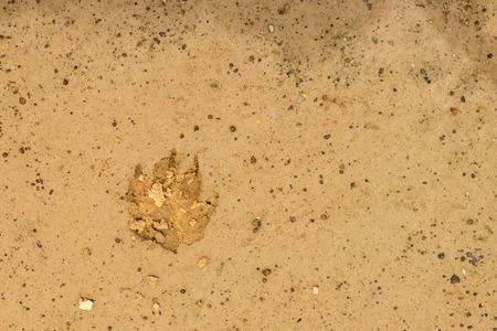 mud print: Dog footprint on the earth