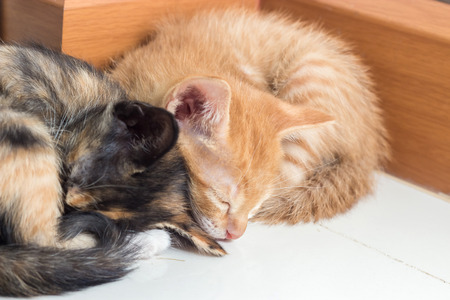 Two kittens curled up sleeping Stock Photo
