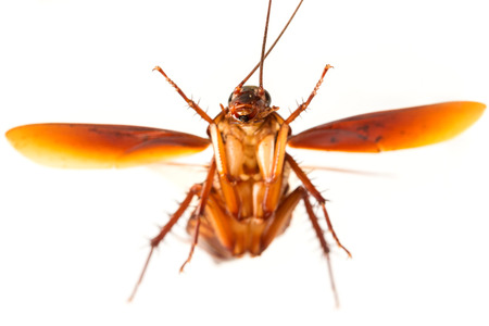 overturn: Flying cockroach.