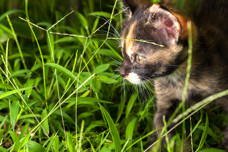 prowl: Kitten on the prowl in grass at night. Stock Photo