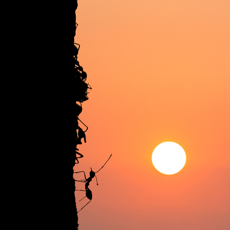 harmonize: silhouette of Foraging red ants with sunset sky. Stock Photo