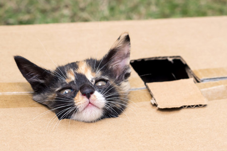 popped: Kittens head popped out of the box Stock Photo