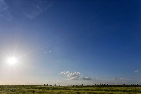 Sunhemp flowers field with blue sky and clouds.