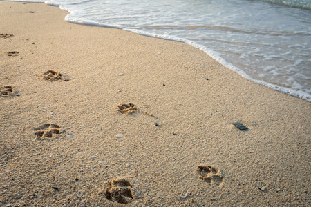 Dog footprints in sand at beach.