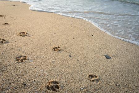 Hond voetafdrukken in zand op het strand.