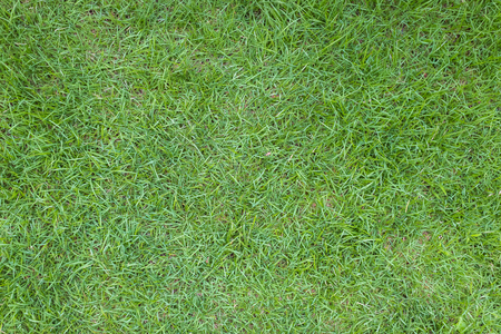 Close-up image of green grass, grass background, bird eyes view. Stock Photo