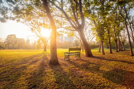 Morning beautiful park scene bench in public park with green grass field, Bankok, Thailand. Standard-Bild